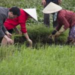 2015 Vietnamfotos Ulz (746)