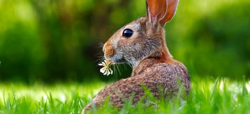 rabbit-1903016_1920 (1)